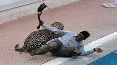 Šialené video: Leopard sa dostal priamo do priestorov školy a útočil na ľudí!