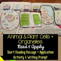 Animal & plant cells + organelles read and apply activity Interactive Activities, Interactive Notebooks, Reading Passages, Reading Comprehension, Plant Cell Organelles, Cells Activity, Teaching Science, Life Science, 6th Grade Science