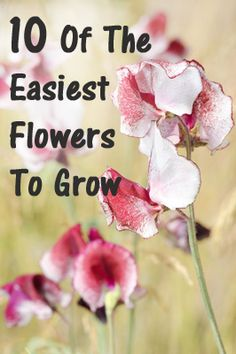 10 Of The Easiest Flowers To Grow