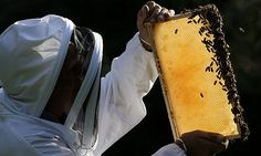 Top 10 things you can do to help honey bees