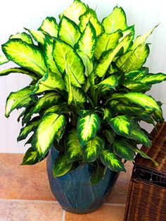 Low Light Outdoor Plants Houseplants You Can't Kill  Houseplant Plants And Houseplants