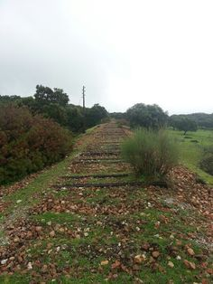 Lonely train rails