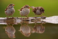 Three little birds..