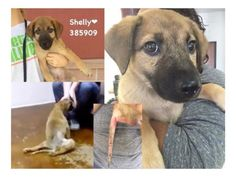 Puppy Shelly can't walk and needs your help (Shelly)