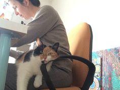 working, with the studio kitty Sini. Art Blog, Kitty, Studio, Cats, Animals, Little Kitty, Gatos, Animales, Kitty Cats