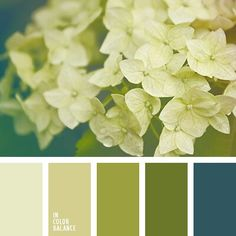 A fresh spring green to really bring some light into the house and freshen up the place