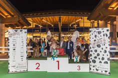 """Dogs Day 2016 - Esposizione Canina """"Best in Show"""""""