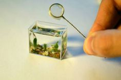 OddFuttos, When The Photos Speak: The Smallest Aquarium In The World – Miniature Home For A Fish