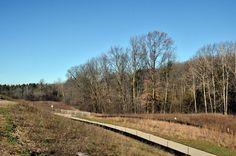 Backyard Railroad Tracks, My House, Backyard, Yard, Backyards