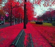 leaves, paraiso, trees, vermelho
