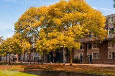 2014-10-04 Een herfst-wandeling door Beverwaard en Oud IJsselmonde