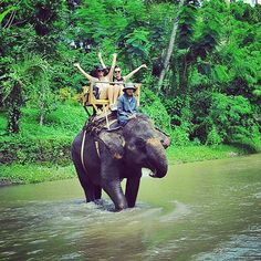 Bucket list: take a walk on the wild side and ride an elephant! TWICE - Thailand 2012 and Bali 2013 Adventure Bucket List, Adventure Is Out There, Okinawa, Bucket List Before I Die, New York City, 100 Things To Do, Just Dream, Destination Voyage, Summer Bucket Lists