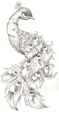 Awesome drawing of Peacock!  Leave comment!:)