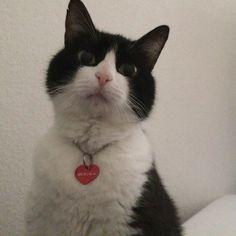 Menina Cat | Pawshake Berlin