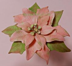 Pink Poinsettia by SallyMack