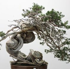 Awesome Bonsai Art: Look at This Living Sculpture...!