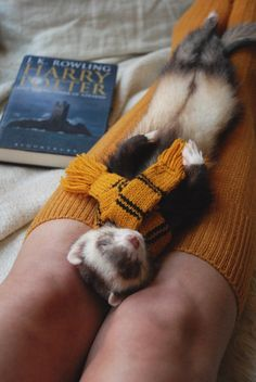 you should get a ferret - Hogwarts Cute Little Animals, Cute Funny Animals, Pet Ferret, Cute Ferrets, Cute Animal Pictures, Cute Creatures, Fantastic Beasts, Animals Beautiful, Hufflepuff Pride