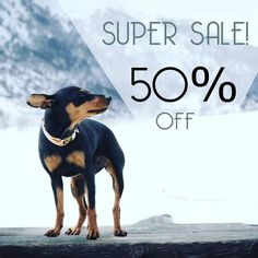 Last hours and last units of the super sale! Get your collar or leash for only 13. Price is already discounted so you don\'t need to enter any code. Feel free to tag your friends  Offer ends in 12 hours! #fyrahcollection #dog #perro #collar #dogcollar #pinscher #chihuahua #frenchie #husky #fashion #puppy #leash #ilovemydog #shop #style #dogleash #etsy #pet #handmade #love #cute #dogsofinstagram #golden #gold #pug #labrador #pomeranian #bostonterrier #doberman #etsygifts by fyrahcollection