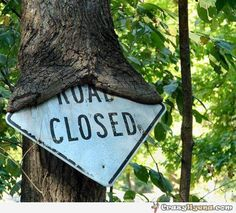 A funny tree seems to be eating a sign about a closed road