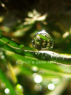 The Sunny Side of Dewdrops Fine Art Macro by littlemphoto on Etsy, $30.00
