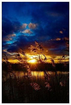 MyPinBlog - Golden sunset nature photography