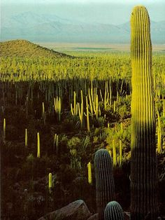 This reminds me of a painting by #DiegoRivera called #LandscapeWithCacti