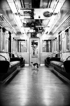 Japanese train & cat