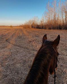 Equestrian, Photos, Goals, Instagram, Spring, Daughter, Beauty, Pictures, Horseback Riding