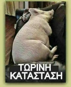 Greek, My Love, Funny, Quotes, Animals, Humor, Quotations, Animales, Animaux