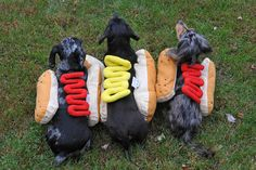 Doxies in hot dog costumes