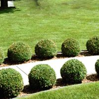 Landscape Project • Green Gem Boxwood | House: Landscaping ...