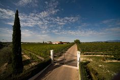 Great Valpolicella wines from Zenato winery