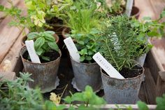 DIY clay herb markers from Joanna Gaines Herb Markers, Plant Markers, Garden Markers, Magnolia Market, Magnolia Homes, Growing Herbs, Growing Tree, Joanna Gaines, Farm Gardens