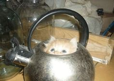 If I Fits, I Sits: 23 Cats Proving They're Liquid 6 - https://www.facebook.com/different.solutions.page