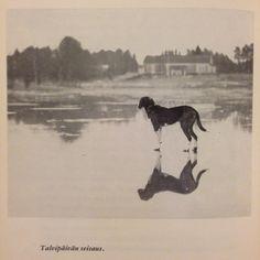 From Kylän koirat by Veikko Huovinen