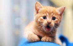 Cute Cats Tumblr Wallpaper 1920×1200 Cute Cat Pics Wallpapers (40 Wallpapers) | Adorable Wallpapers