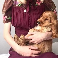 """Excellent """"cocker spaniel"""" information is readily available on our web pages. Read more and you will not be sorry you did. Perro Cocker Spaniel, Cocker Spaniel Anglais, American Cocker Spaniel, English Cocker Spaniel, Spaniel Breeds, Dog Breeds, I Love Dogs, Cute Dogs, Animals And Pets"""