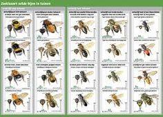 zoekkaart bijen - Nog eens een keer goed kijken welke van deze bestuivers er bij mij in de tuin zitten.