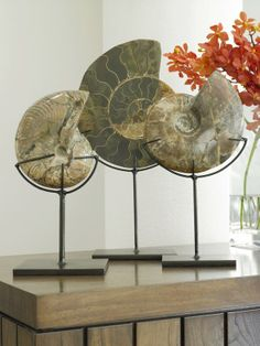 Add beauty and interest to your space with fossils. 200 Lexington Ave, NYC Suite 1502 RaulCarrasco.com