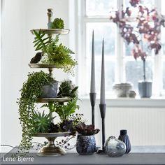 Eine Etagere mit Pflanzen bestückt macht sich super als Dekoration! Mehr auf roomido.com #roomido