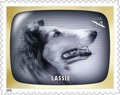 On September 12, 1954, at a time when many Americans had left the countryside for cities and suburbs, Lassie made her television debut, offering viewers a nostalgic look at rural life.