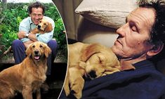 My golden wonders: Monty Don may present Gardeners' World but his golden retrievers Nigel and Nellie have become the real stars of his TV show Longmeadow Garden, Monty Don Longmeadow, Types Of German Shepherd, Dream Garden, Garden Art, Garden Ideas, Real Tv, Bulldog Breeds, Golden Retrievers