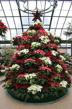 Poinsettia Tree http://loveisinthedetails.ca/blog/2009/12/10/christmas-trees/