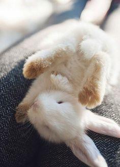 Gudelaa Unisex Adult Animal Paw/&Feet Socks 3D Print Funny Crew Socks
