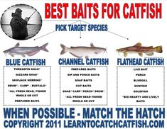 fishing rigs for cat