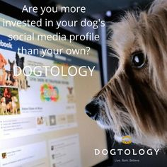 Are you more invested in your dog's social media presence than your own?