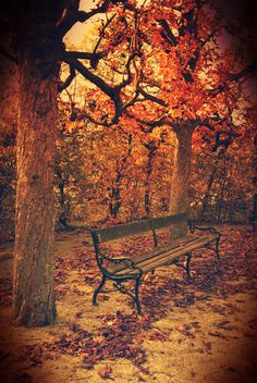 Shonbrunn, Vienna. Outdoor Furniture, Outdoor Decor, Vienna, Benches, Autumn, Seasons, Park, Home Decor, Austria