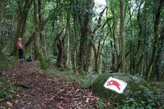 Hogsback Forest eastern cape - Google Search