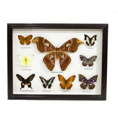 Butterfly Collection. @Kelly McKinley  you know what this reminds me of???!!!!! :o