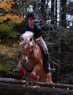 Haflinger Horses Can Jump! Cute Horses, Horse Love, Beautiful Horses, Palomino, Haflinger Horse, Animal Medicine, Tack Rooms, Show Jumping, Equine Photography